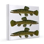 Amazon Wolf fish Trahira 12x12 Canvas Print