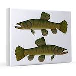 Amazon Wolf fish Trahira 8x10 Canvas Print