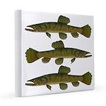 Amazon Wolf fish Trahira 8x8 Canvas Print