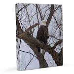 Winter Maple Island Bald Eagle 11x14 Canvas Print