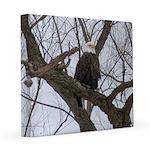 Winter Maple Island Bald Eagle 12x12 Canvas Print