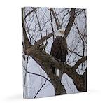 Winter Maple Island Bald Eagle 8x10 Canvas Print
