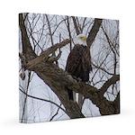 Winter Maple Island Bald Eagle 8x8 Canvas Print