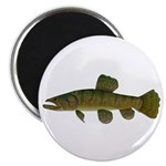 Amazon Wolf fish Trahira Magnets