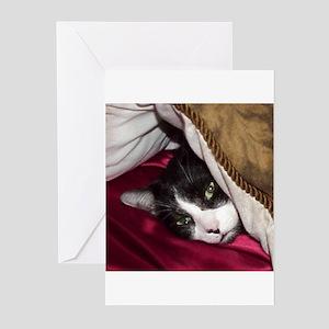 Mr Pig Cat Greeting Cards (Pk of 10)