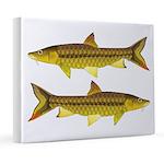 Golden Mahseer 8x10 Canvas Print