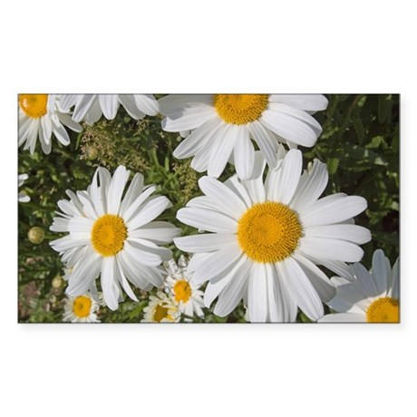 Daisies Sticker (Rectangle)