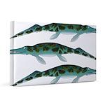 Cymbospondylus 20x30 Canvas Print