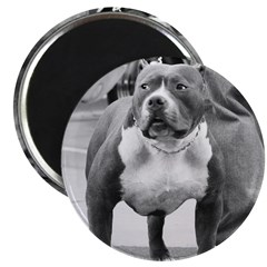 American Staffordshire Terrie 2.25
