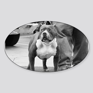 American Staffordshire Terrie Sticker (Oval)
