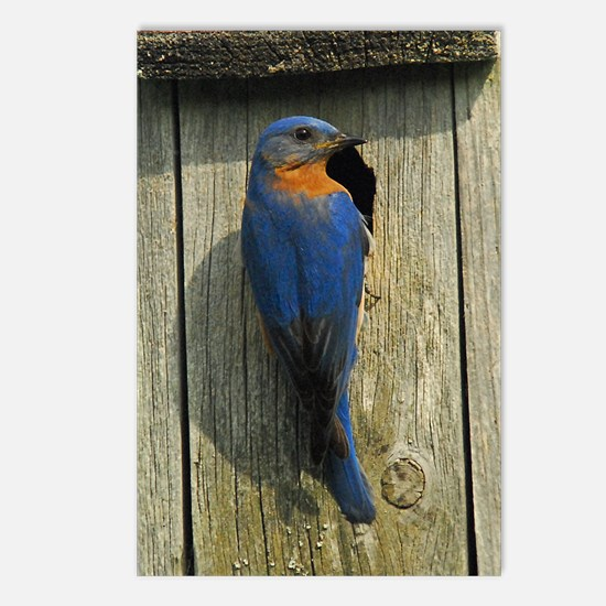 Bluebird Family Postcards (Package of 8)