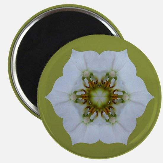 Orchid Kaleidoscope Magnet