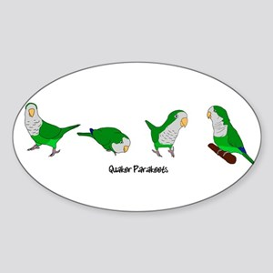 Quaker Parakeets Oval Sticker