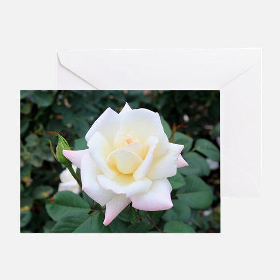 Beautiful Rose Greeting Card