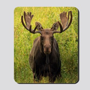 Shiras moose Mousepad
