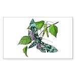 Butterfly Rectangle Sticker