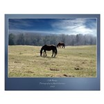 Cold Horses 20x16 Poster