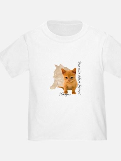 Ginger Cat Kitten T