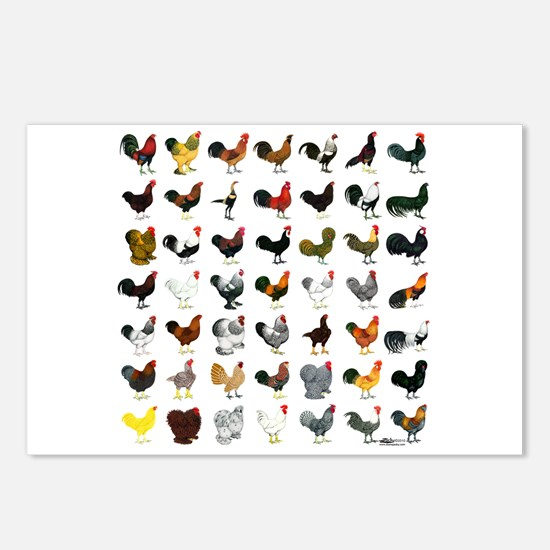 49 Roosters Postcards (Package of 8)