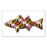 Maryland Flag Rockfish- Catch and Release