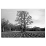 B&W Trees in Field Poster