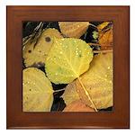 Framed Tile - Aspen Dew