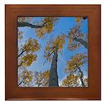 Framed Tile - Lookingup Aspens