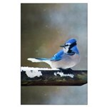 Blue Jay Large Poster