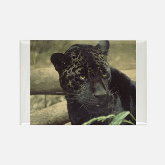 Cute Cougar Rectangle Magnet