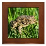 Southern Toad Framed Tile