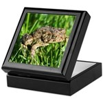 Southern Toad Keepsake Box