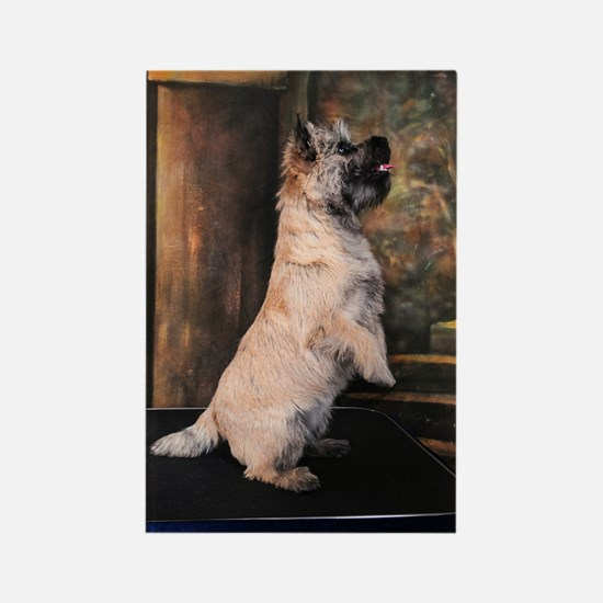 """Sitting Pretty"" Cairn Terrier Rectangle Magnet"