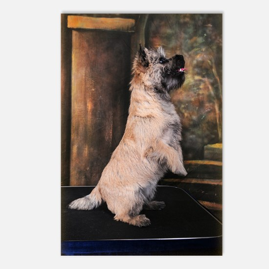 """""""Sitting Pretty"""" Cairn Terrier Postcards (Package"""