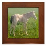 Framed Tile, ClassicCreamChampagneTWH Filly