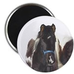 "2.25"" Magnet (10 pack)Spanish Gaited Pony Colt"