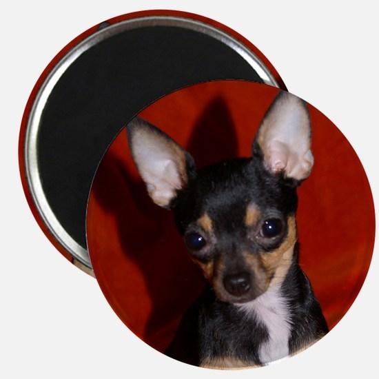 Cute Chihuahua puppy Magnet