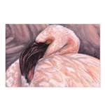 Flamingo Postcards (Package of 8)