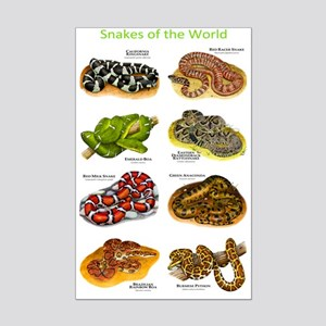 Snakes of the World Mini Poster Print