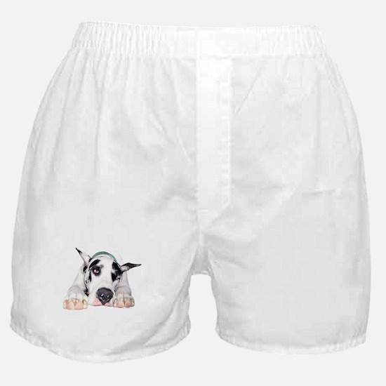 Great Dane Shy Harlequin Boxer Shorts