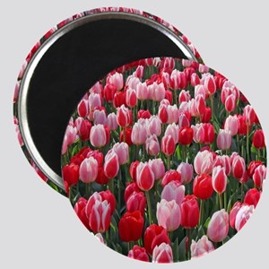 Red & Pink Tulips Holland Netherlands Magnets