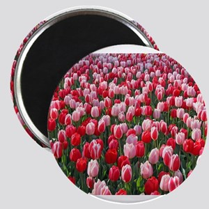 Dutch Tulips Red & Pink Magnets
