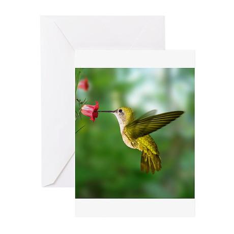 Bird Photo Greeting Cards (Pk of 10)