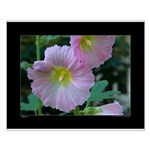Hollyhocks Small Poster