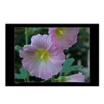 Hollyhocks Postcards (Package of 8)