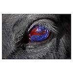 Horse Eye Poster