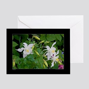 White Columbine blossoms Greeting Card