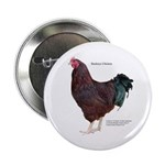 """Buckeye Chicken 2.25"""" Button (10 pack)"""
