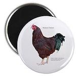 "Buckeye Chicken 2.25"" Magnet (100 pack)"