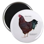 Buckeye Chicken Magnet