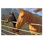 Horses at Gate Poster